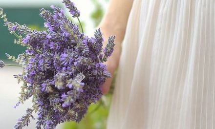 Lavender – My Favorite Oil