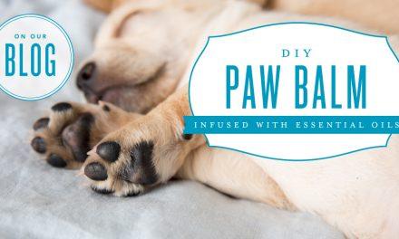 DIY Paw Balm