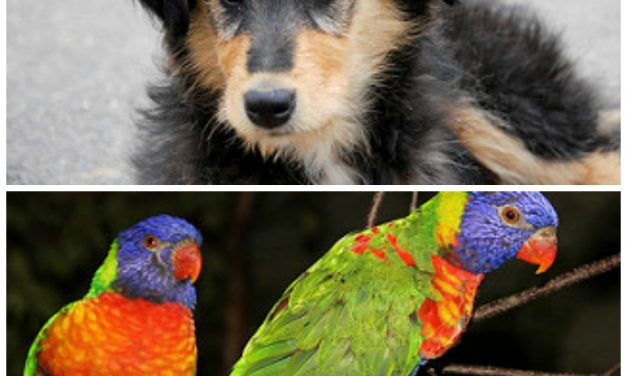 All Animals Can Benefit from Essential Oils!