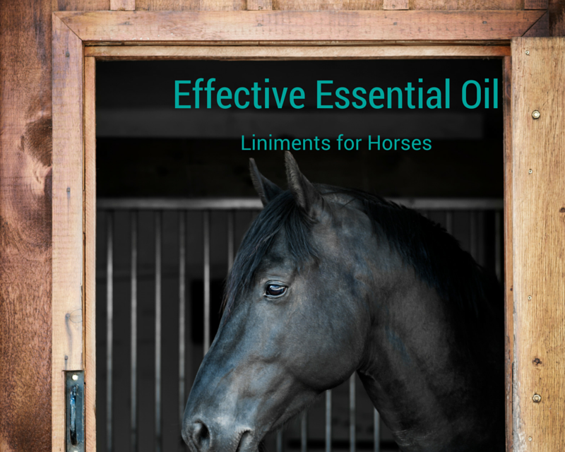 Making your own Equine Liniment! with Essential Oils….  And it's much more effective!