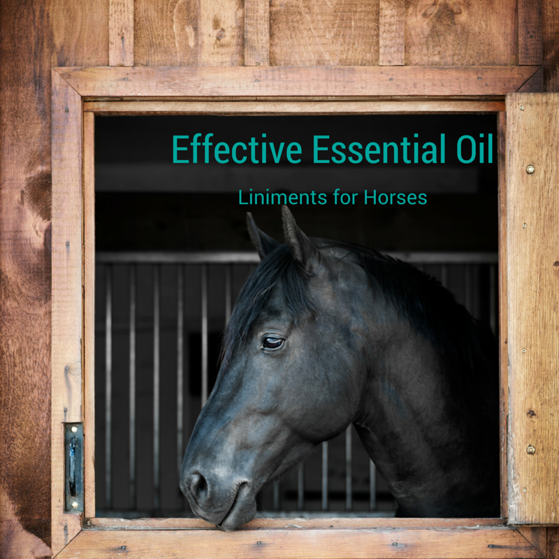 Equine Liniment! with Essential Oils