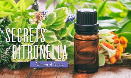 Citronella!!!  Its a must have about now!