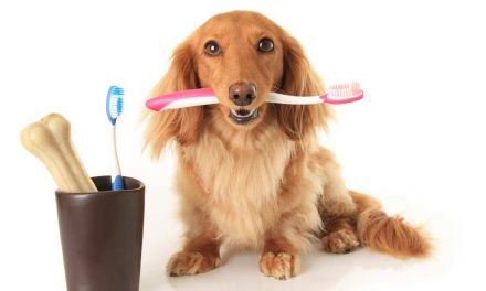 Kat's Simple 3 ingredient Doggie Toothpaste