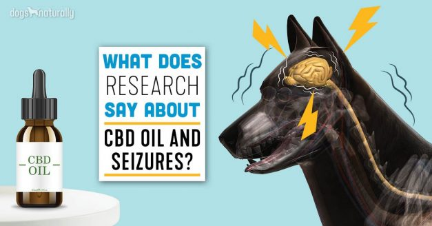 CBD Oil and your Dog!