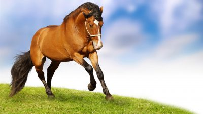 Supporting your horses nervous system!