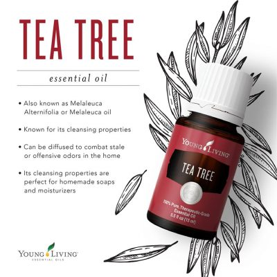 Tea Tree!  A must have for your horses first aid kit!
