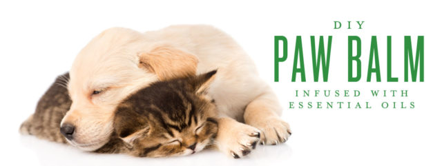DIY Paw Balm infused with Essential Oils