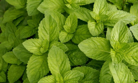 6 straight up clever ways to use Spearmint essential oil