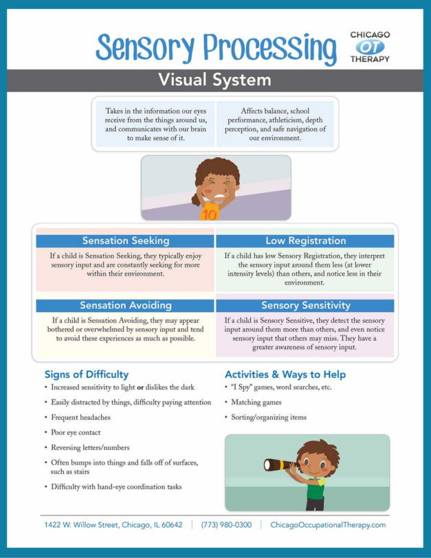 OT Education: Visual System Sensory Processing