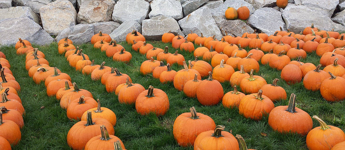 Enhance your Wellness with Essential Oils, and Pumpkin!