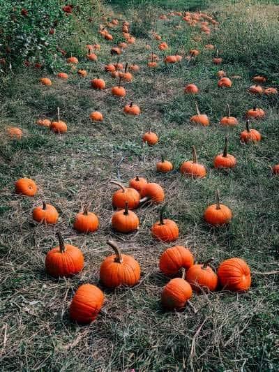 Amazing Pumpkin Smoothie