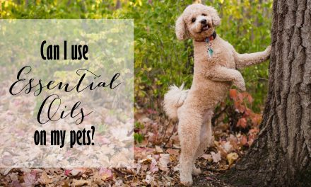 Essential Oils for Pets